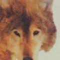 Profile picture of Zeid
